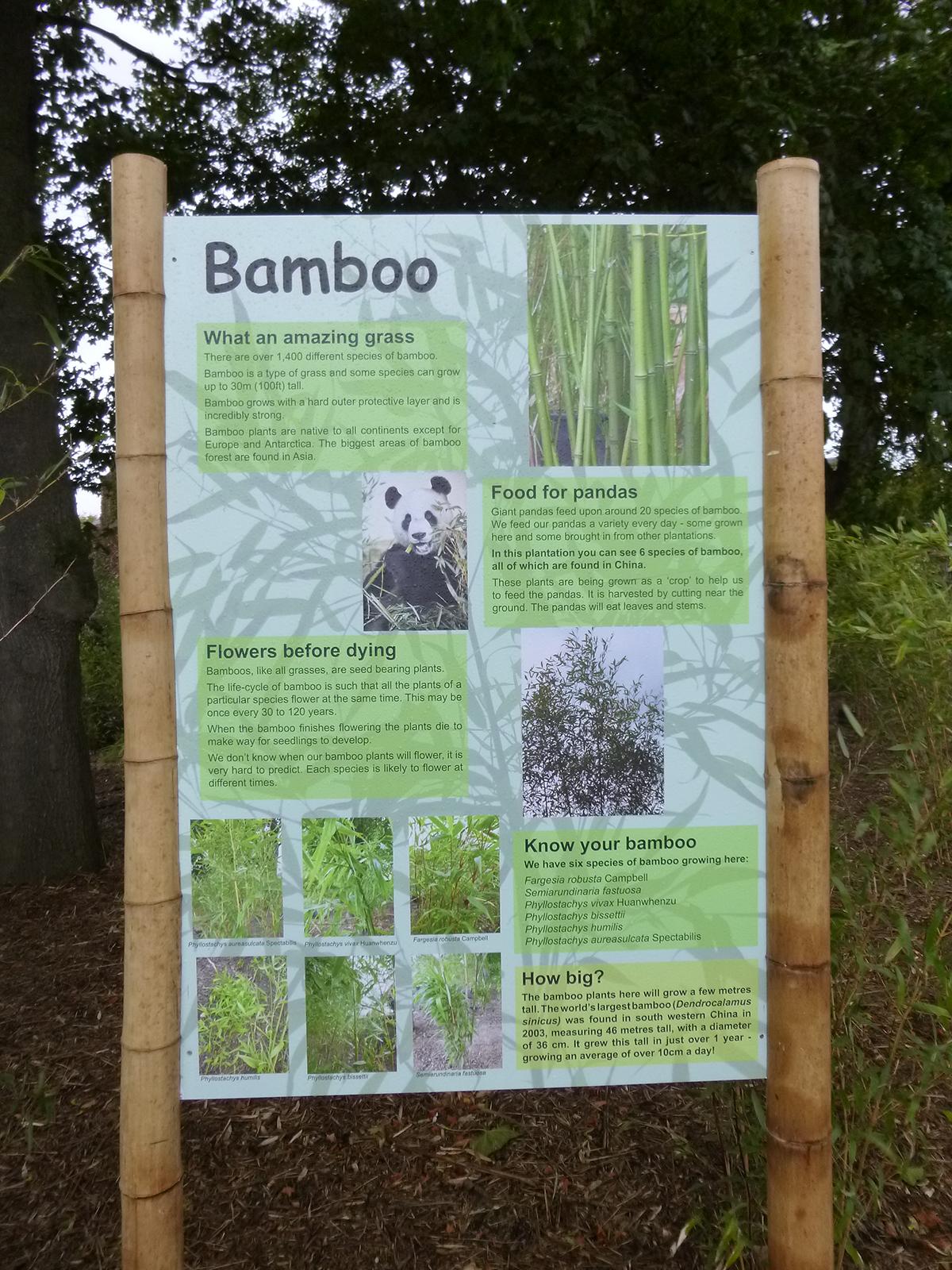 Bamboo Garden RZSS
