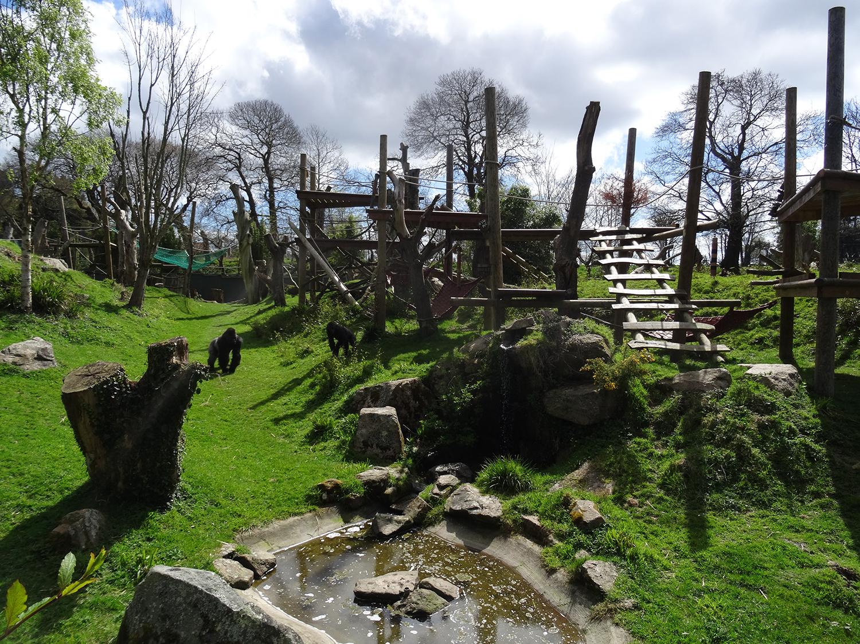 durrell gorilla